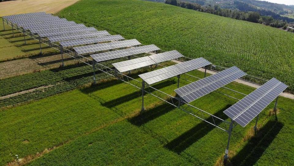 Agrofotovoltaika: ker so nad njivo postavili sončno elektrarno, je bil pridelek večji