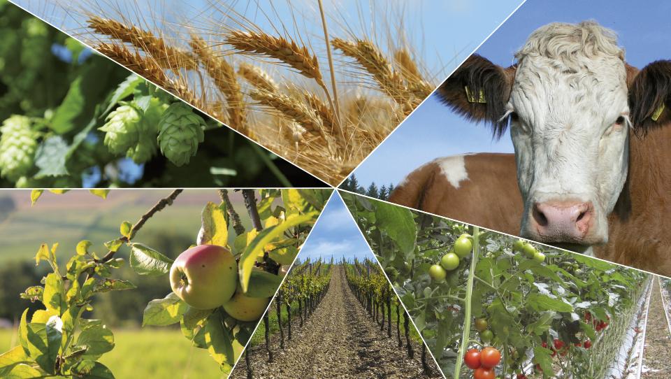 Kmetje koristite skupinski pristop pri zavarovanju posevkov in plodov