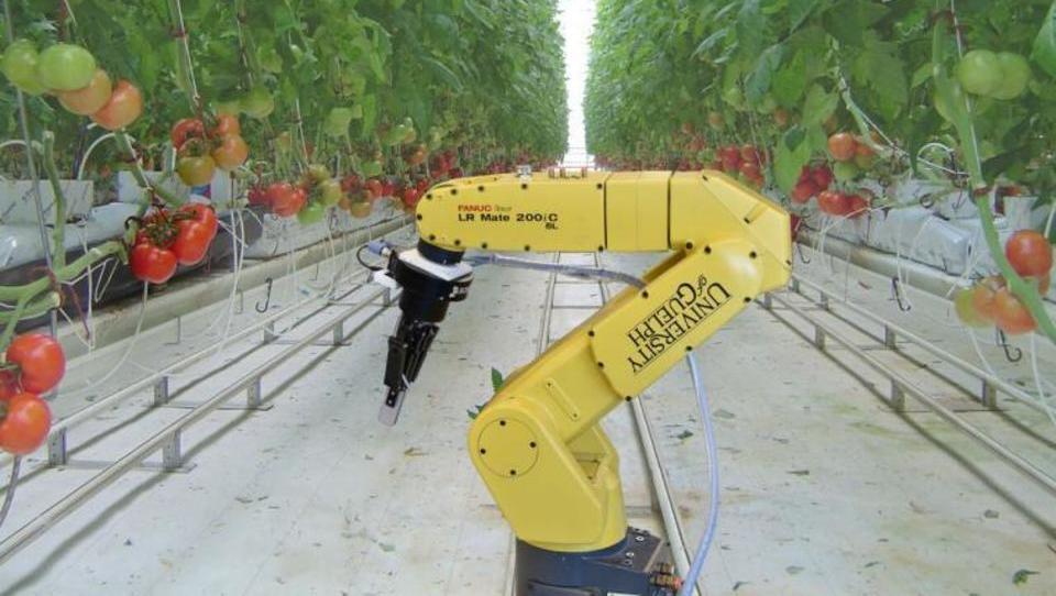 Kako roboti prevzemajo delo na kmetiji