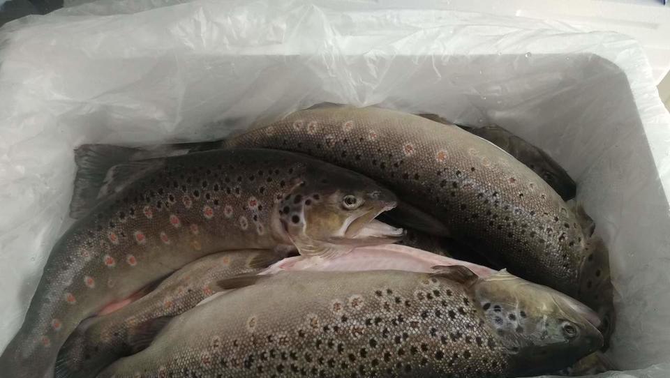 Kmalu spletna prodaja sladkovodnih rib