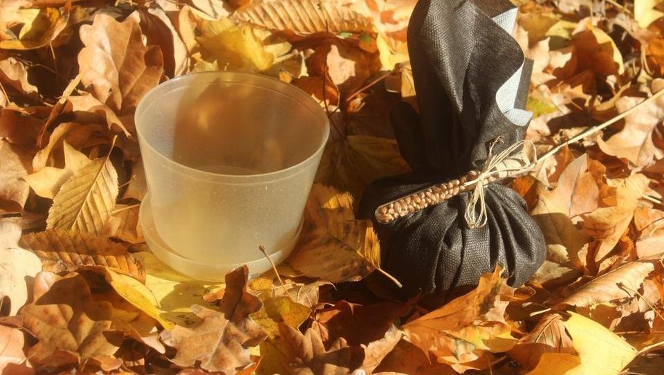 Najpodjetniška ideja: Lončki iz bioplastike in semen, ki jih lahko preprosto odvržete med bioodpadke