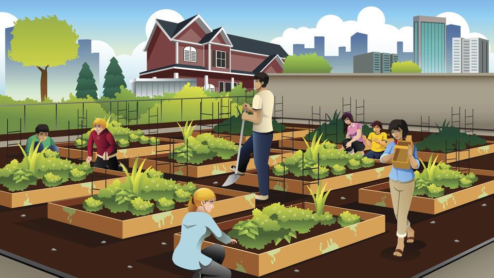 Urbano vrtičkarstvo – kaj vse potrebujete za svojo lastno gredico?