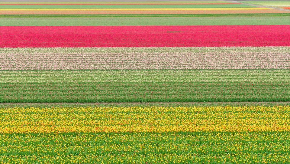Zakaj kmetijstvo na Nizozemskem »cveti«?