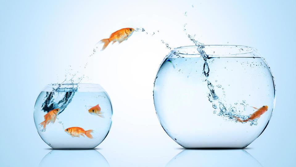 Mala in srednja podjetja naprodaj: kaj pravijo potencialni kupci in kaj svetujejo svetovalci