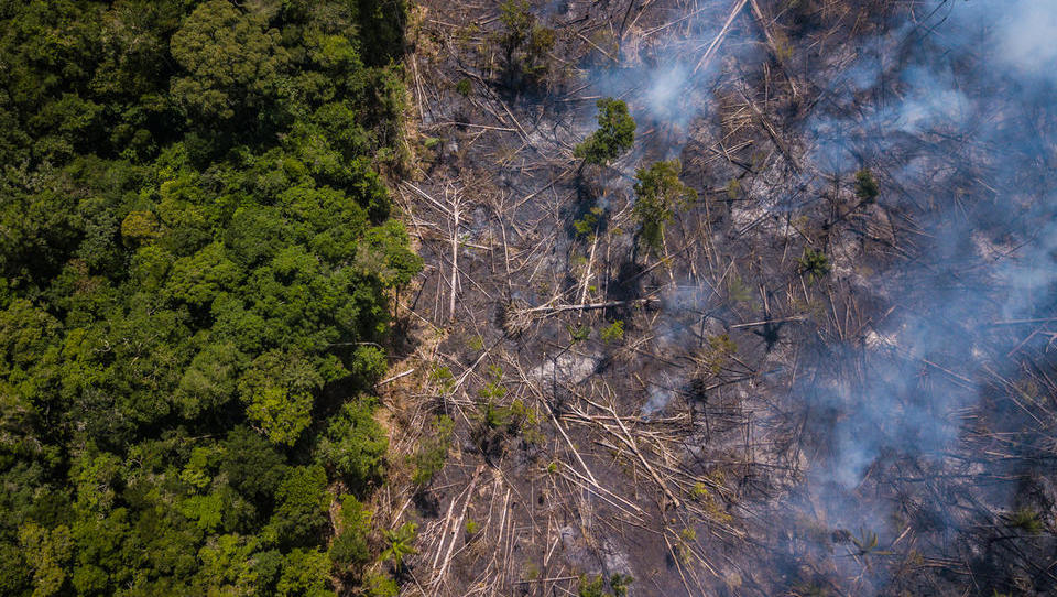 Sedem držav sklenilo pakt za zaščito Amazonije