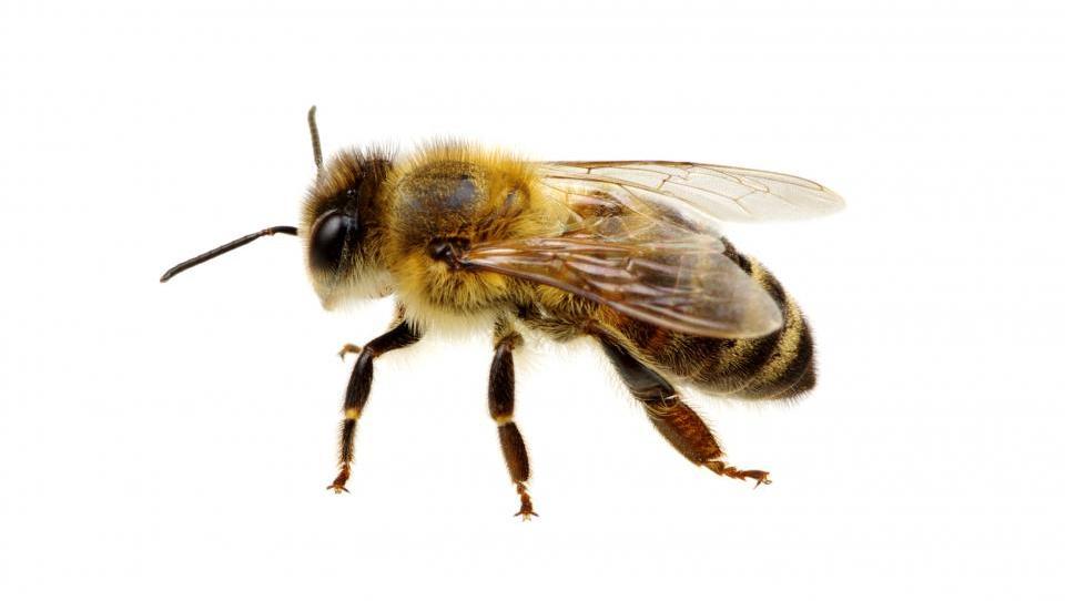 Na balkonu do 20 kilogramov lastnega medu