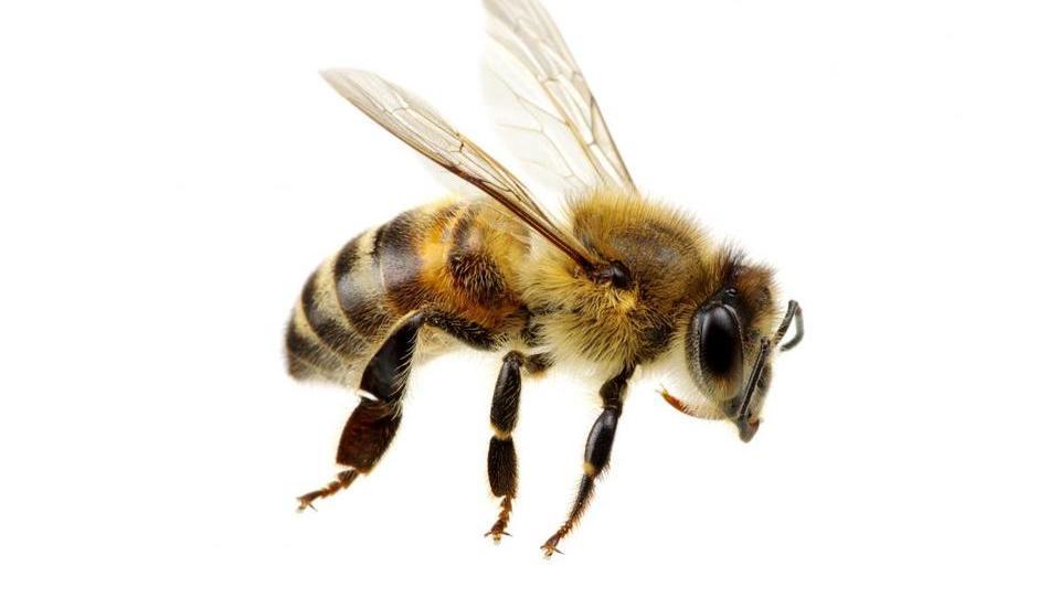 Dobrega pol milijona čebelarski zvezi za svetovanje