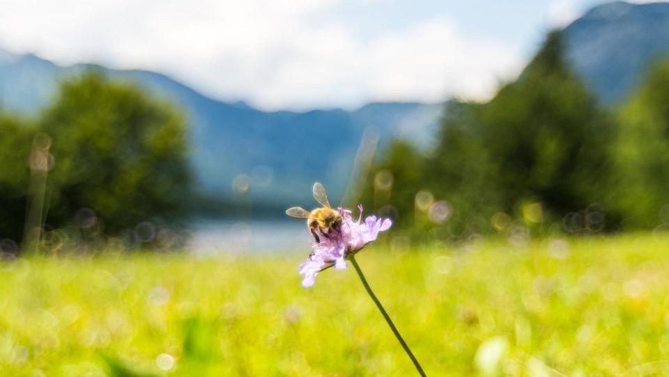 Slovenci smo med pionirji čebelarskega turizma