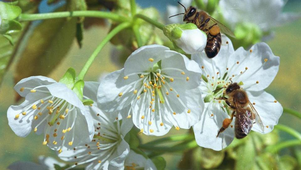 FAO podpira našo pobudo, da 20. maj postane svetovni dan čebel