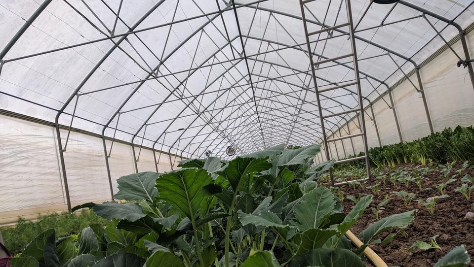 Manj ovir za postavitev rastlinjakov