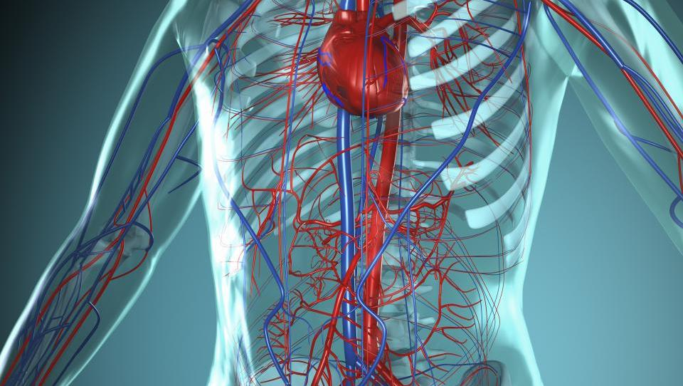 Pomembni podatki o prepletanju poslabšanj pri KOPB in srčno-žilnih boleznih