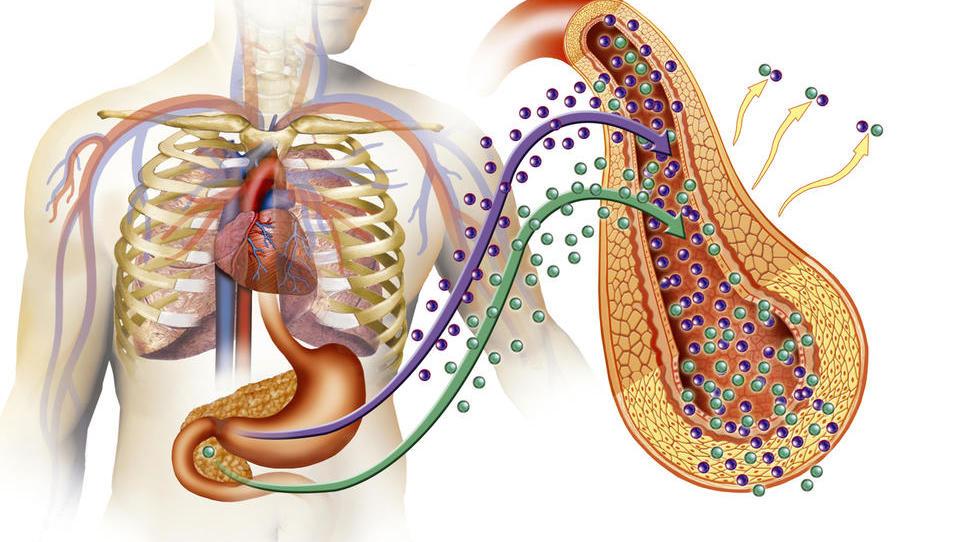Skovanka »diabesity« usmerja razvoj zdravil