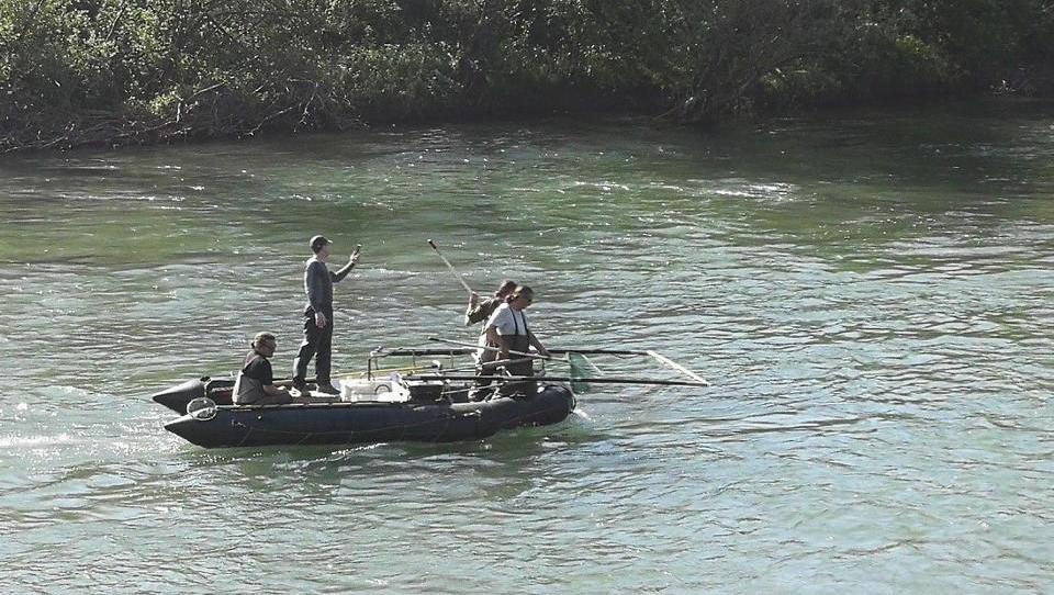 Inšpektorji: društvo za preučevanje rib je lovilo ribe z elektriko
