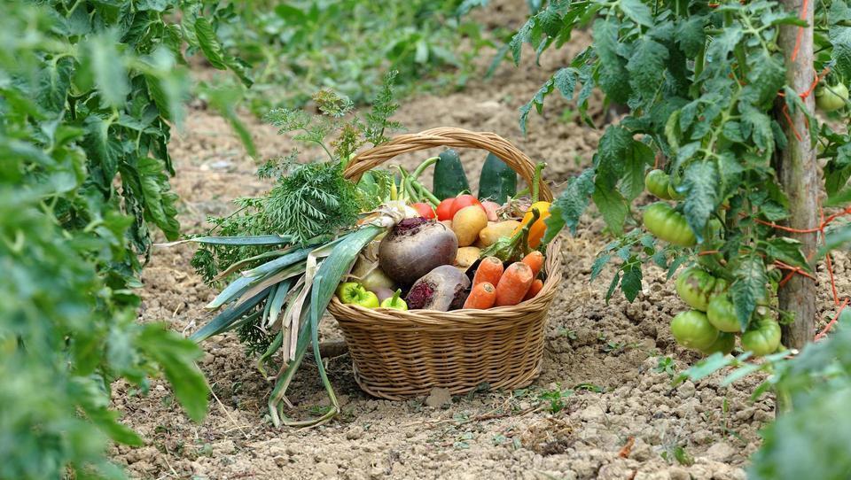 Tu najdete kmetije, ki prodajajo lokalno hrano