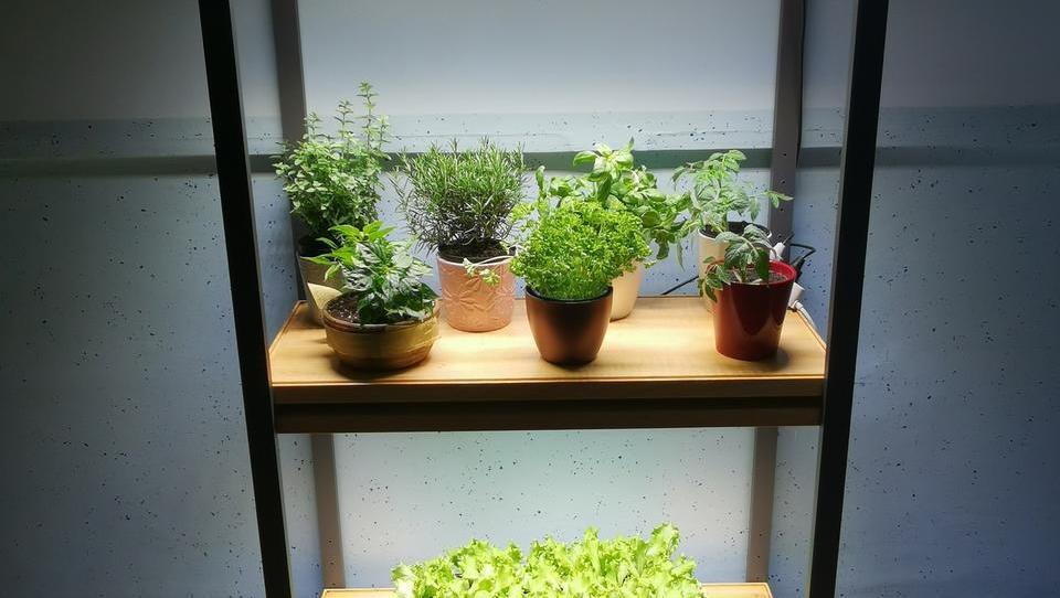 Pod LED-svetili lahko vse leto »vrtnarite« v zaprtih prostorih