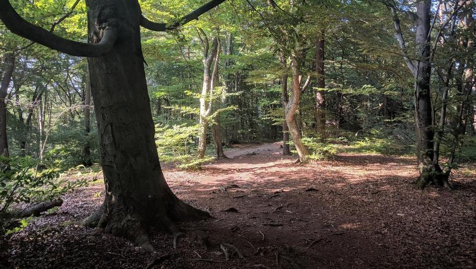 Težko je verjeti: na Novi Zelandiji denar raste na drevesih, v Sloveniji je gozd vir ogljika