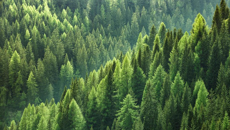 16-milijonska škoda v gozdovih zaradi podlubnikov in oktobrskega neurja