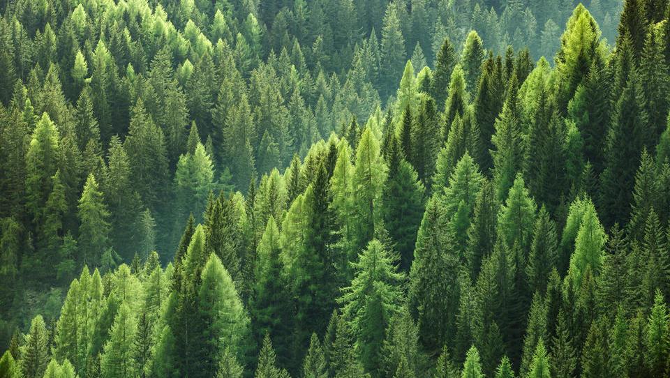 Prodajali in kupovali smo gozdove
