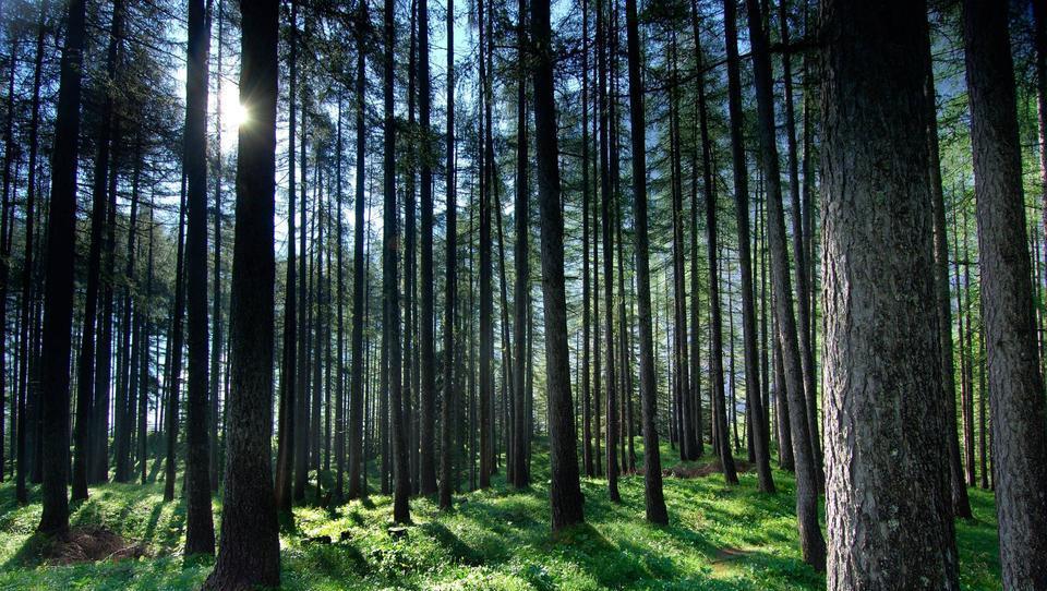 Kako lahko kupite gozd v državni lasti