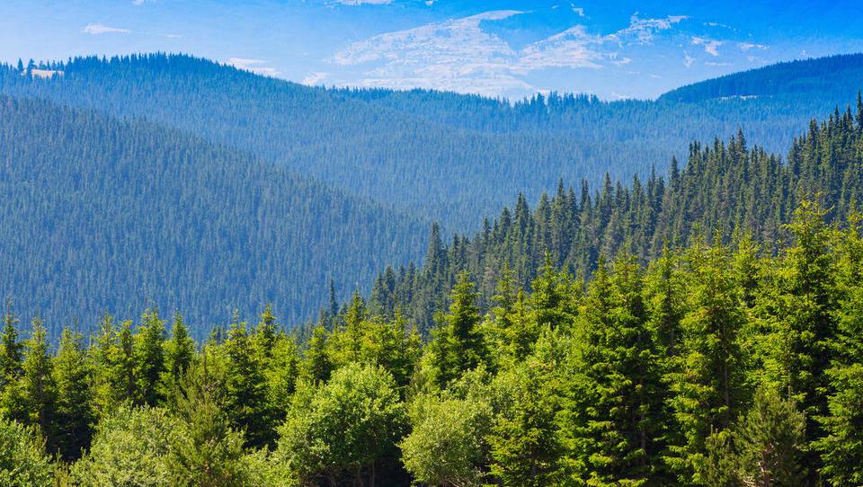 Kako financirati naložbo v gozdno - lesno predelovalne obrate?