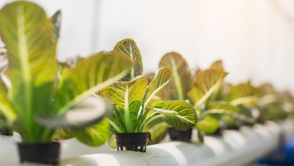 Pozor! Iščemo najboljše uporabnike, ponudnike in ideje na področju novih tehnologij v kmetijstvu!
