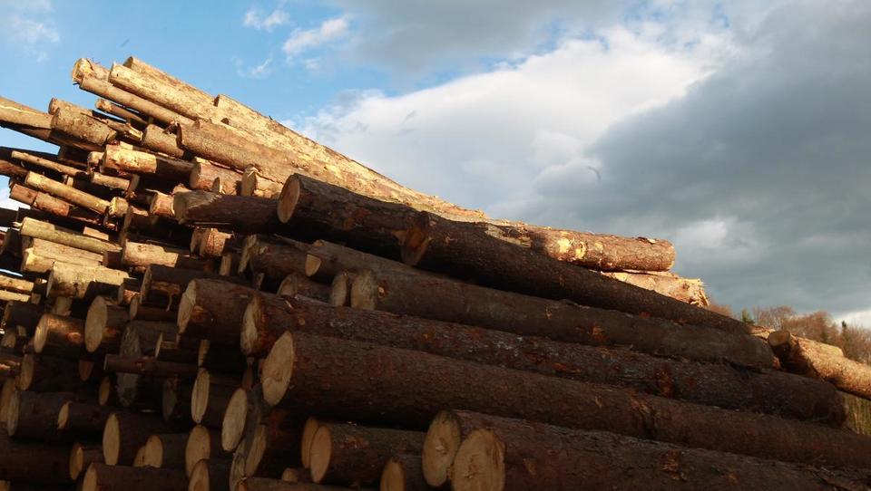 11. dražba lesa: V Slovenj Gradcu že na ogled vrednejša hlodovina