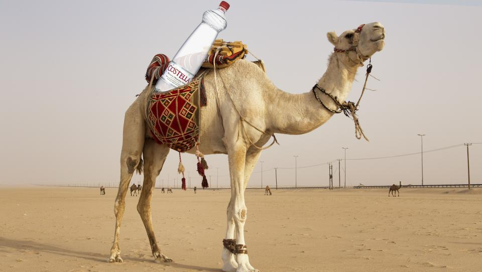 Costello na kamelo: Arabci kupili polnilnico vod