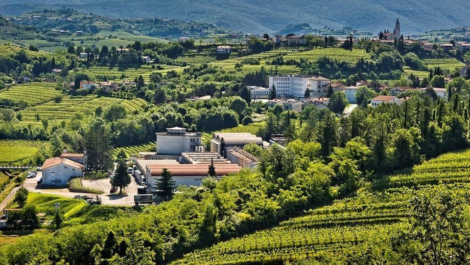 Uspešno leto kleti Brda: dolgoletna konsistentna kakovost vin se meri v zlatu in srebru