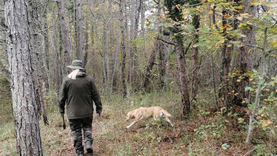 Na lovu za tartufi s Saro Kocjančič in psičko Lizo
