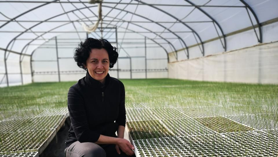 Tako farmacevtka vodi eno večjih zelenjadarskih kmetij na Dravskem polju