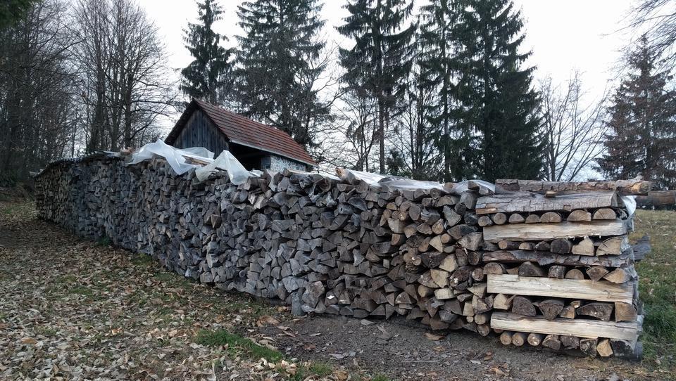 Šesterica toži EU, ker spodbuja kurjenje lesa, kar povzroča več izpustov kot premog