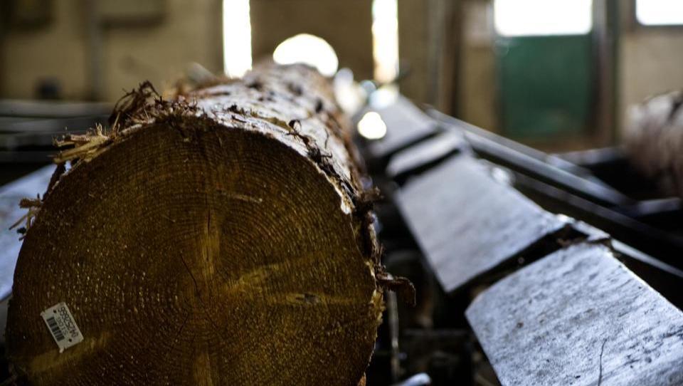 Bei MBS List, dem größten slowenischen Sägewerk, investiert man beschleunigt und modernisiert die Produktion