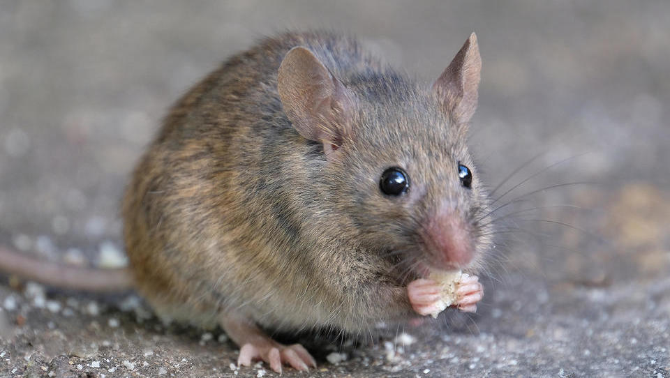 Kako varčevati za pokojnino, da na stara leta ne boste revni kot cerkvena miš?
