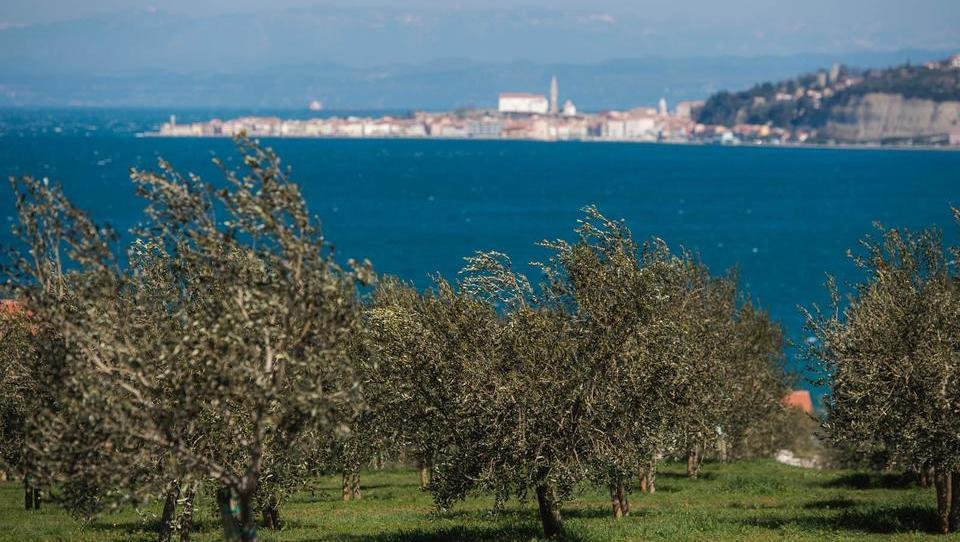 Na Obali so gospodarsko boljši kot po kakovosti življenja