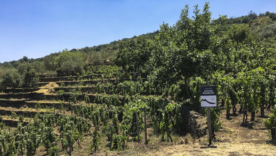 Na svetu za 8 odstotkov manj vina