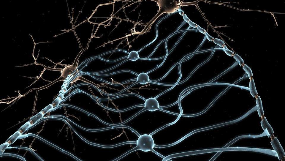 S kadmijem kontaminirana prehrana vpliva na pojavnost možganske kapi