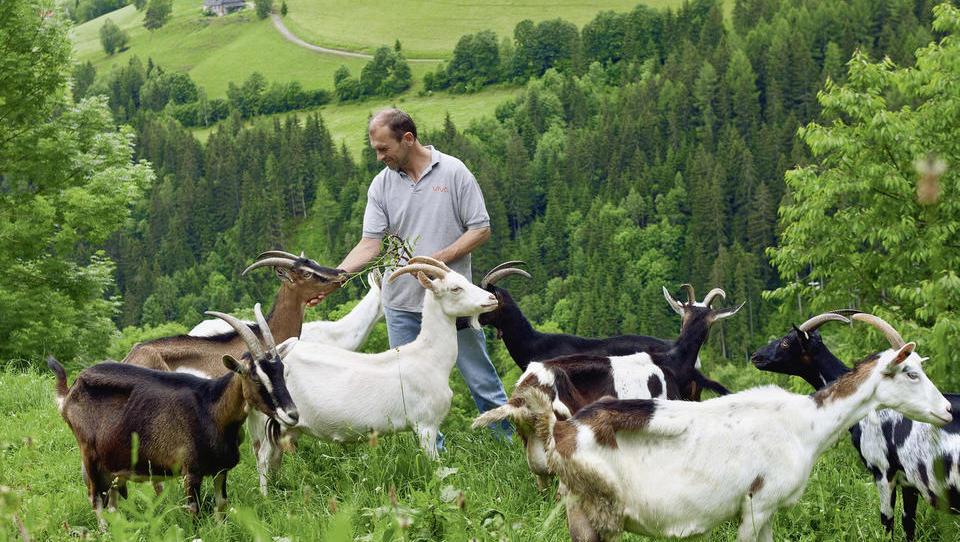 Kmetje, pozor! Pravočasno oddajte vlogo za letošnje subvencije