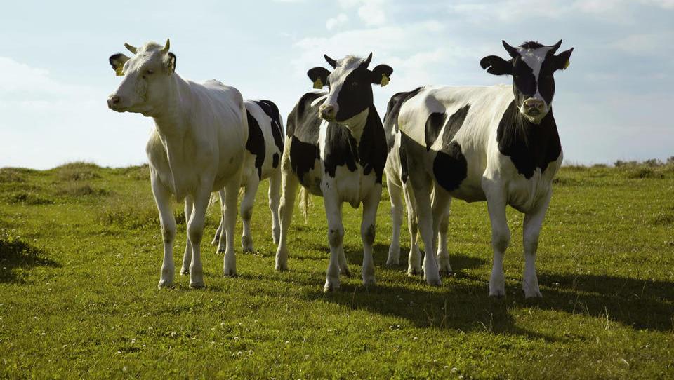 Z zmanjšanjem živinoreje ne bomo rešili okolja