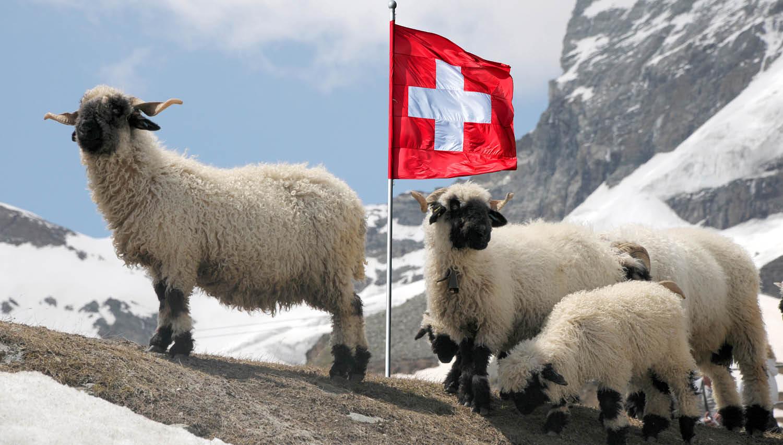 11 dilem interventne konverzije posojil v frankih v evre