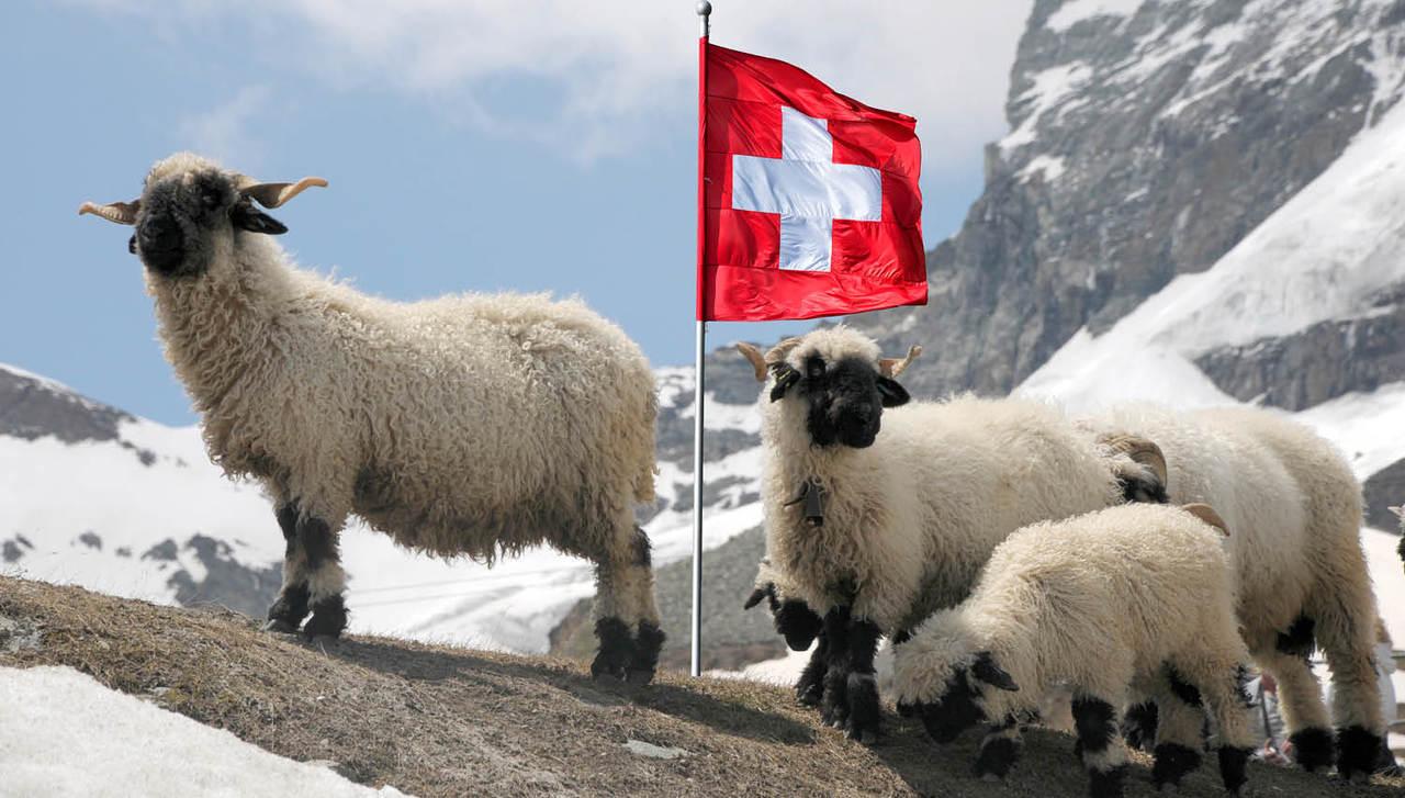 Vrhovno sodišče zavrnilo revizijo pri švicarskih frankih