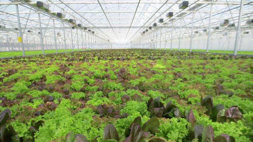 Kakšna bo skupna kmetijska politika po letu 2020