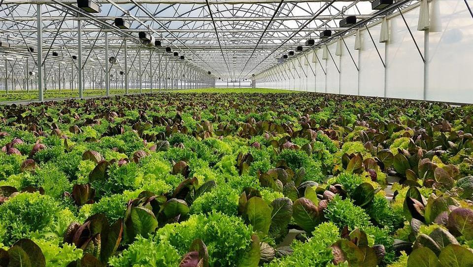 Panorganix napoveduje štiri rastlinjake po Evropi
