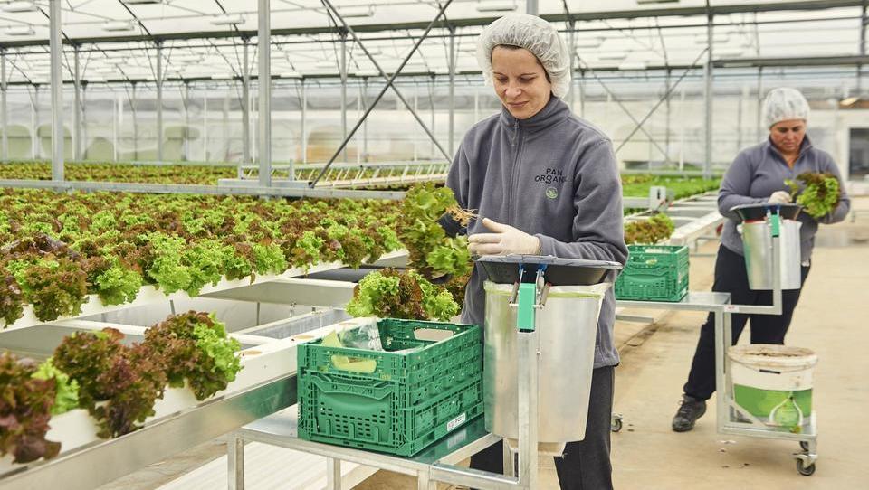 Panorganic širi pridelavo v Avstriji
