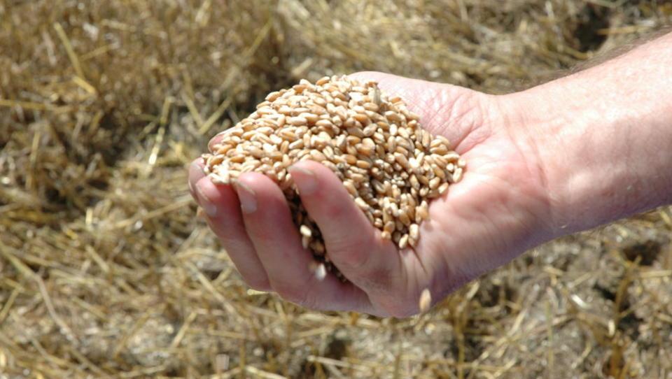 Zdrava prehrana: sezonsko in lokalno