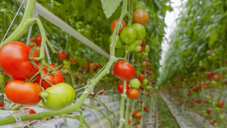 Pametni sistem Exactum za rastlinjake prilagajajo drugim industrijam