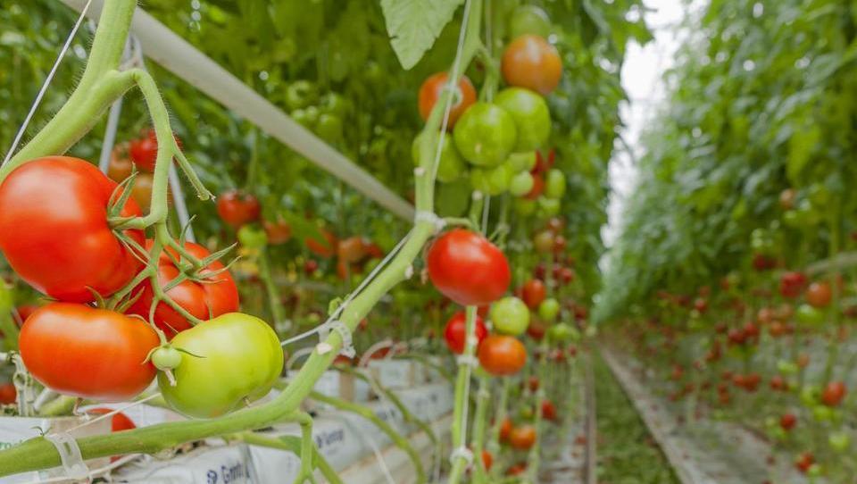 Gorenjska rešitev Exactum Greenhouse pomaga do večjega pridelka v rastlinjaku
