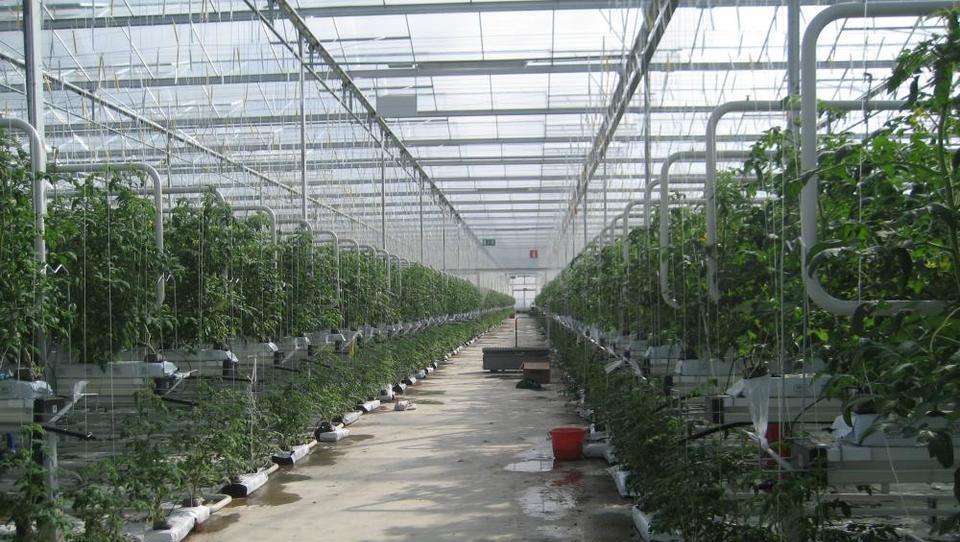 Kako s toplotnimi črpalkami ogrevajo paradižnik Lušt