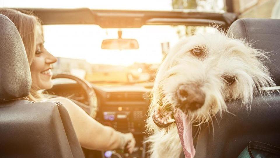 Psa vzemite s sabo v tujino, sicer vas davkarija ne bo spustila iz krempljev