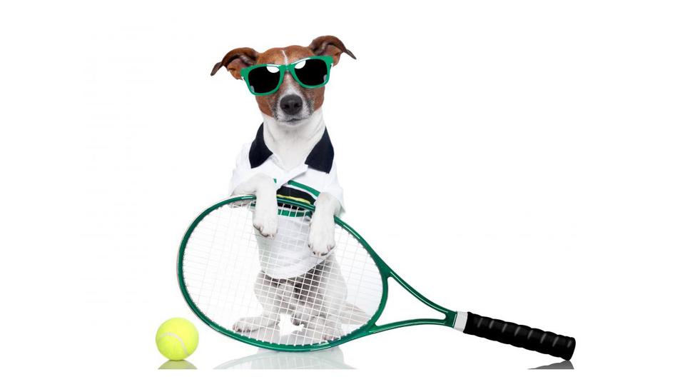 Kako vam lahko teniški lopar in žogica prineseta službo