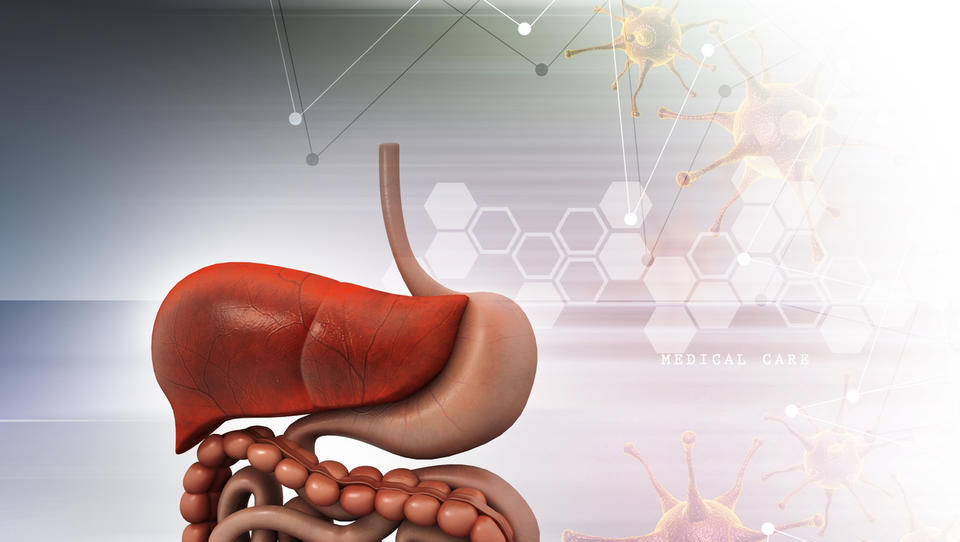 (Hepatologija) Objavljena so stališča za oskrbo bolnikov z boleznimi jeter